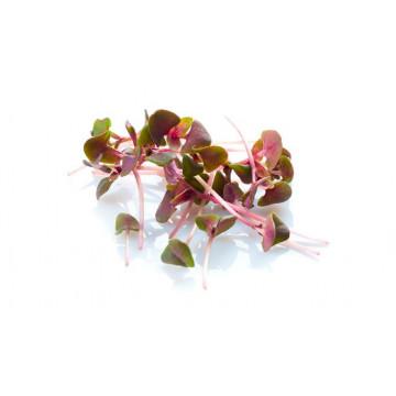 Семена микрозелени Базилик Красный Smart Food