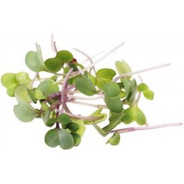 Семена микрозелени Капуста Кольраби Smart Food